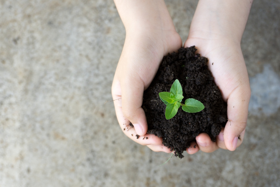 Hände vom Kind mit Erde und kleiner Pflanze