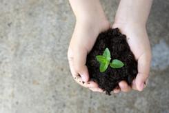Neues Leben pflanzen