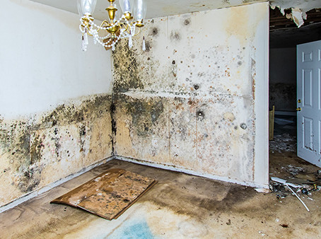 Addressing Mold After a Natural Disaster