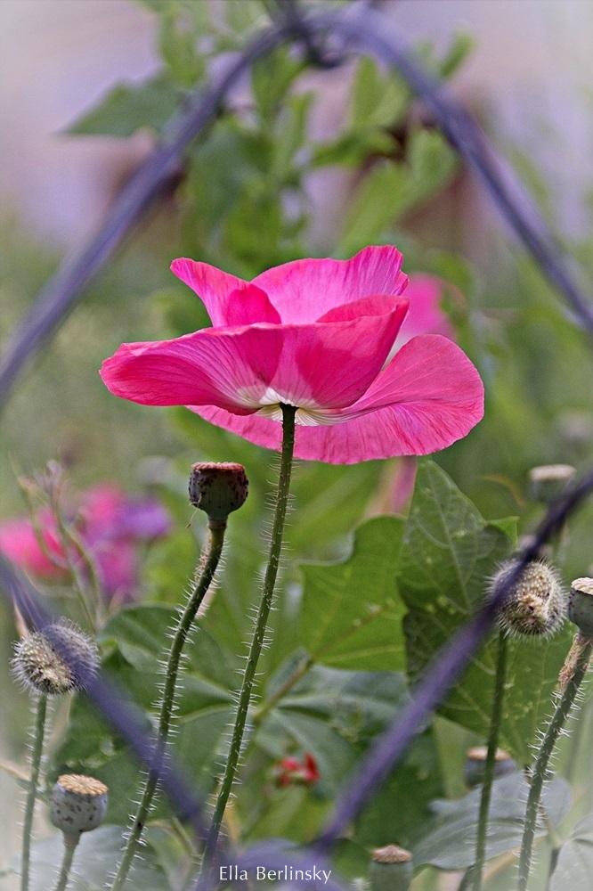 פרח2-3-2.jpg
