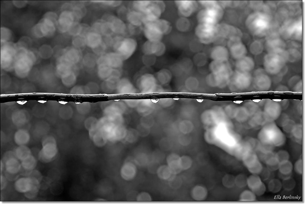 טיפות גשם.jpg