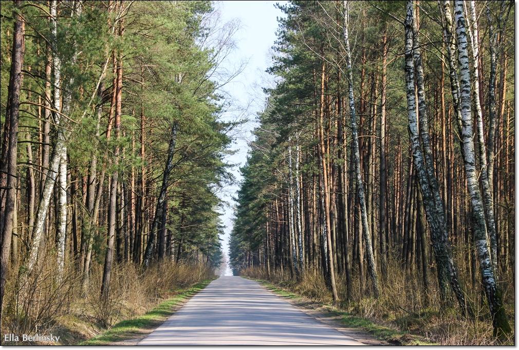 פולין 240314 519.jpg