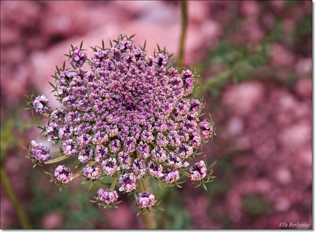 פרח.jpg