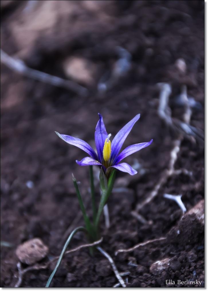 פרח סגול.jpg