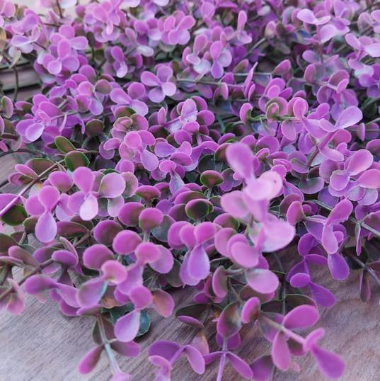 Purple Boxus