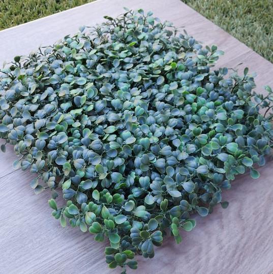 Green Boxus