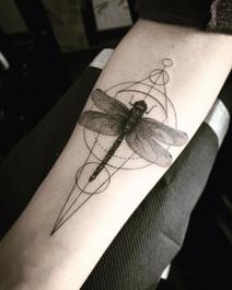 sam_dragonfly.jpg
