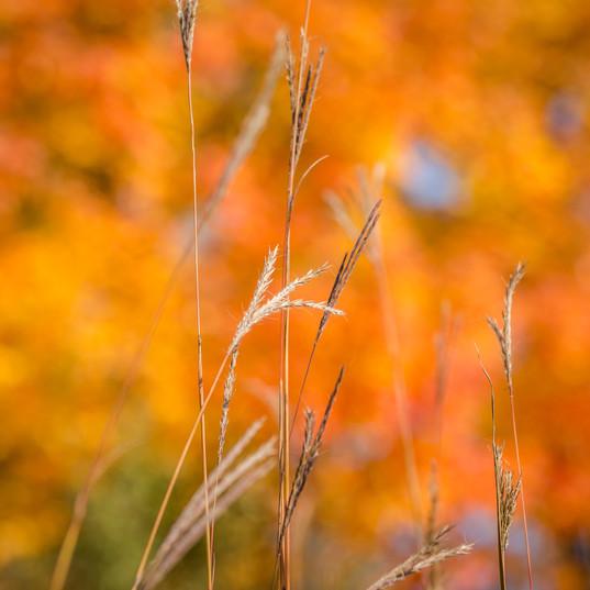 autumn-grass.jpg