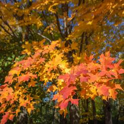 autumn-fire-10.16-mchildress.jpg