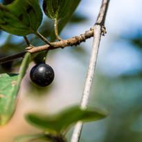 lone-berry-10.16-mchildress.jpg