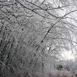 winter-ice-storm (2).jpg