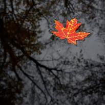 Leaf-on-Water.jpg