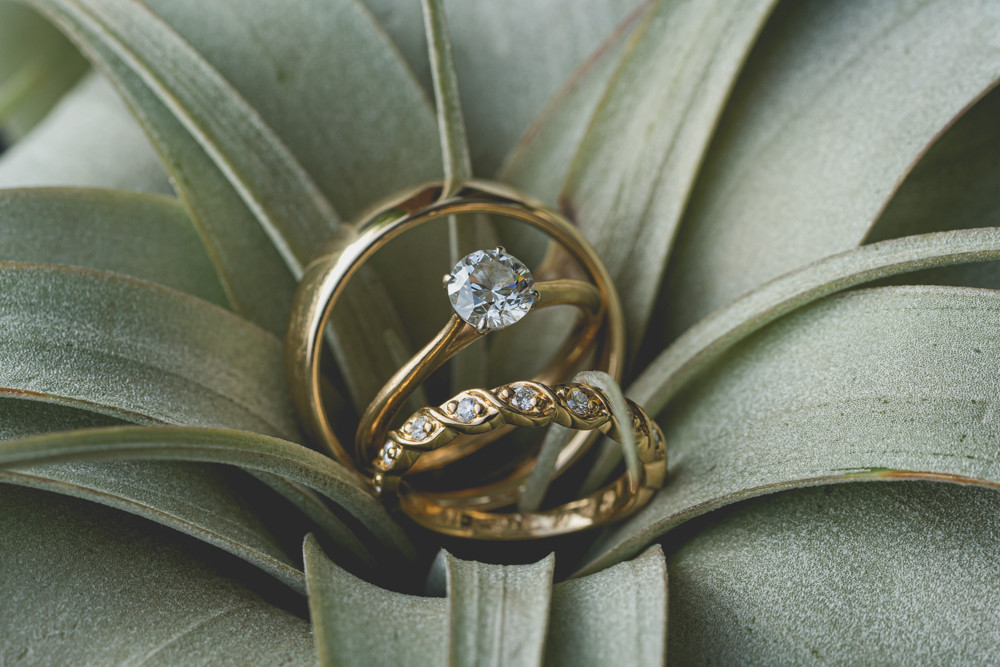 Wedding rings in Suculant