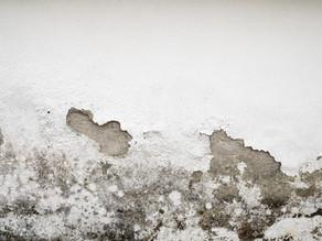 Como reparar y pintar una pared con humedad