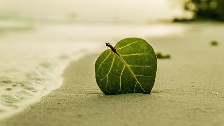 beach-394503_1920-1700x956.jpg