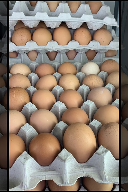Brown Eggs (Free Range)