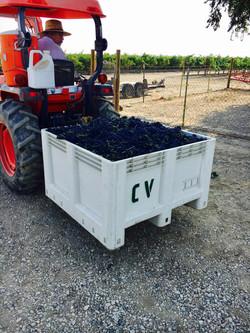 2018 First Harvest