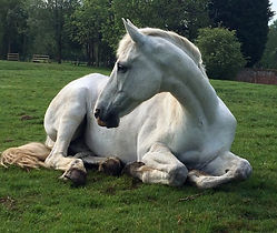 Horses carry the residue of past traumas