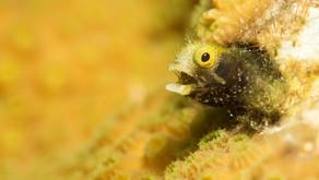 8 Photos to Inspire you to Dive Bonaire