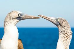 Nature Photography Birds
