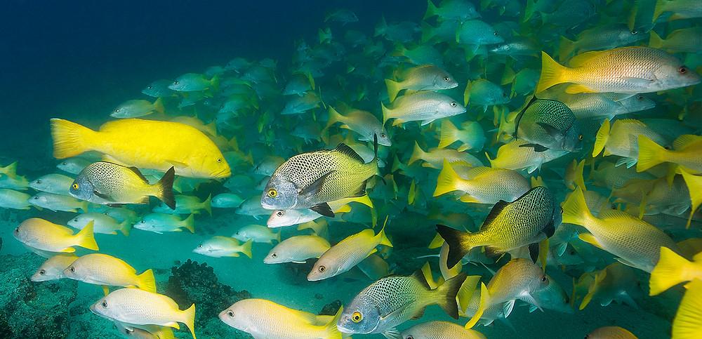 School of Fish In Cabo Pulmo Mexico