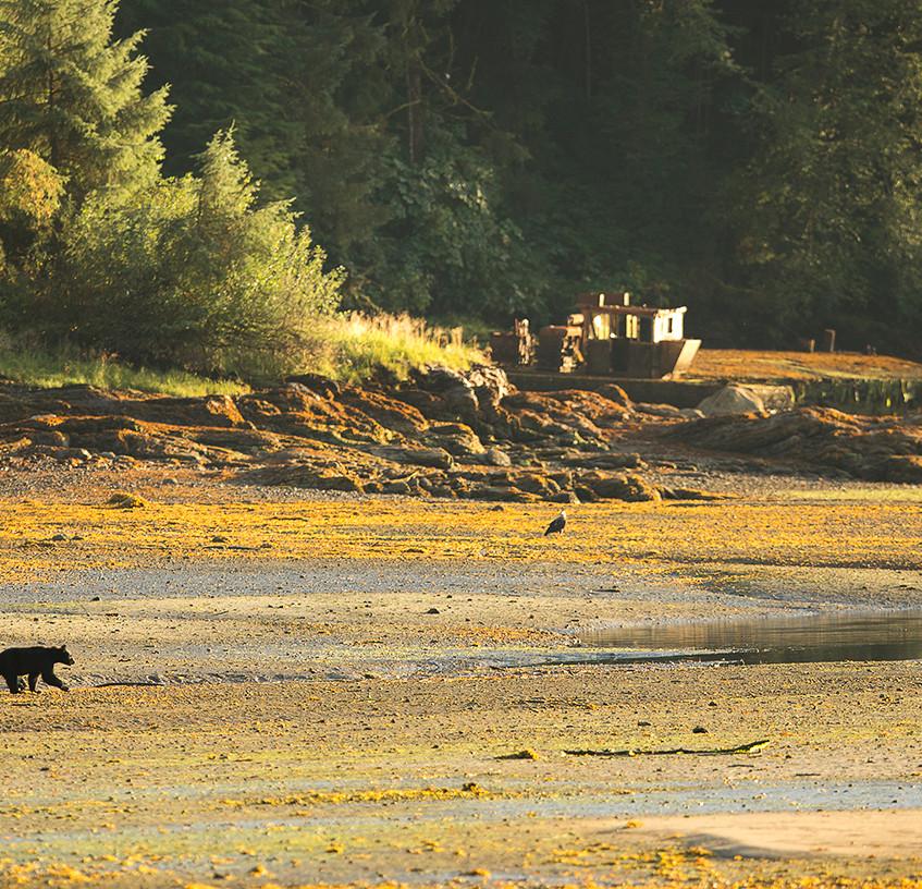 bear scene 2 copy