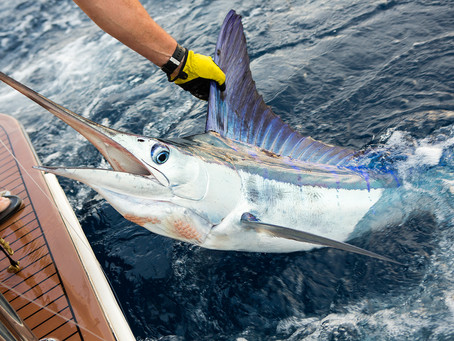 STRIPE MARLIN MADNESS