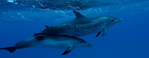 Dolphin Watching Charter Key West