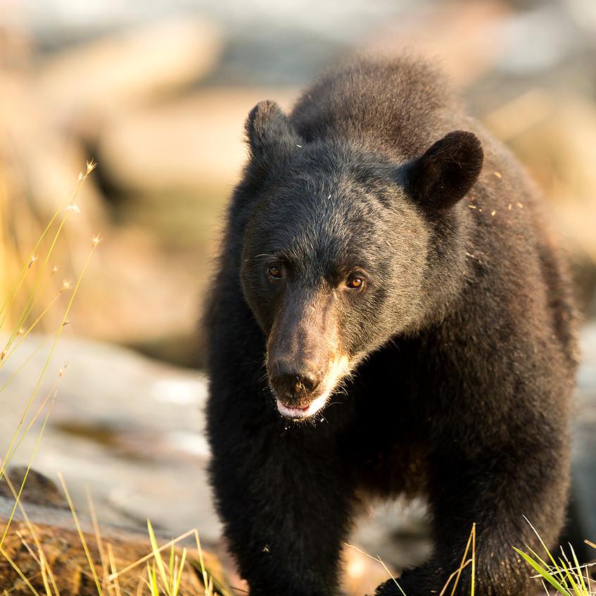 bear closeup copy