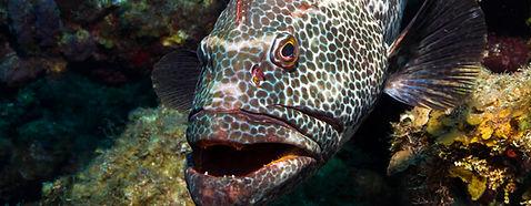 Grouper Snorkeling Charter Key West