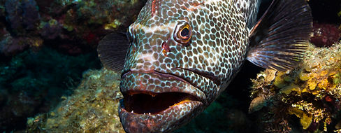 Grouper Snorkeling Charter Key West