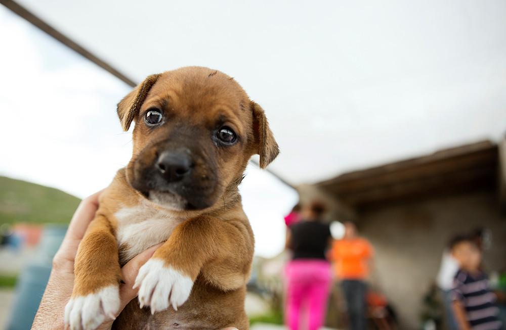 Mag Bay mexico Puppy