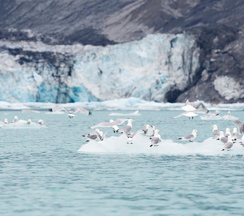 seagull iceburg copy