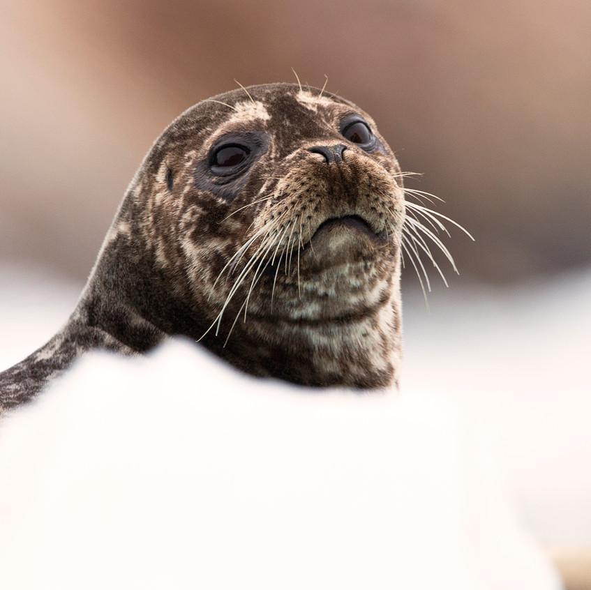 seal head copy