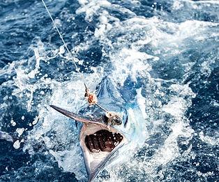 Offshore Fishing Marlin