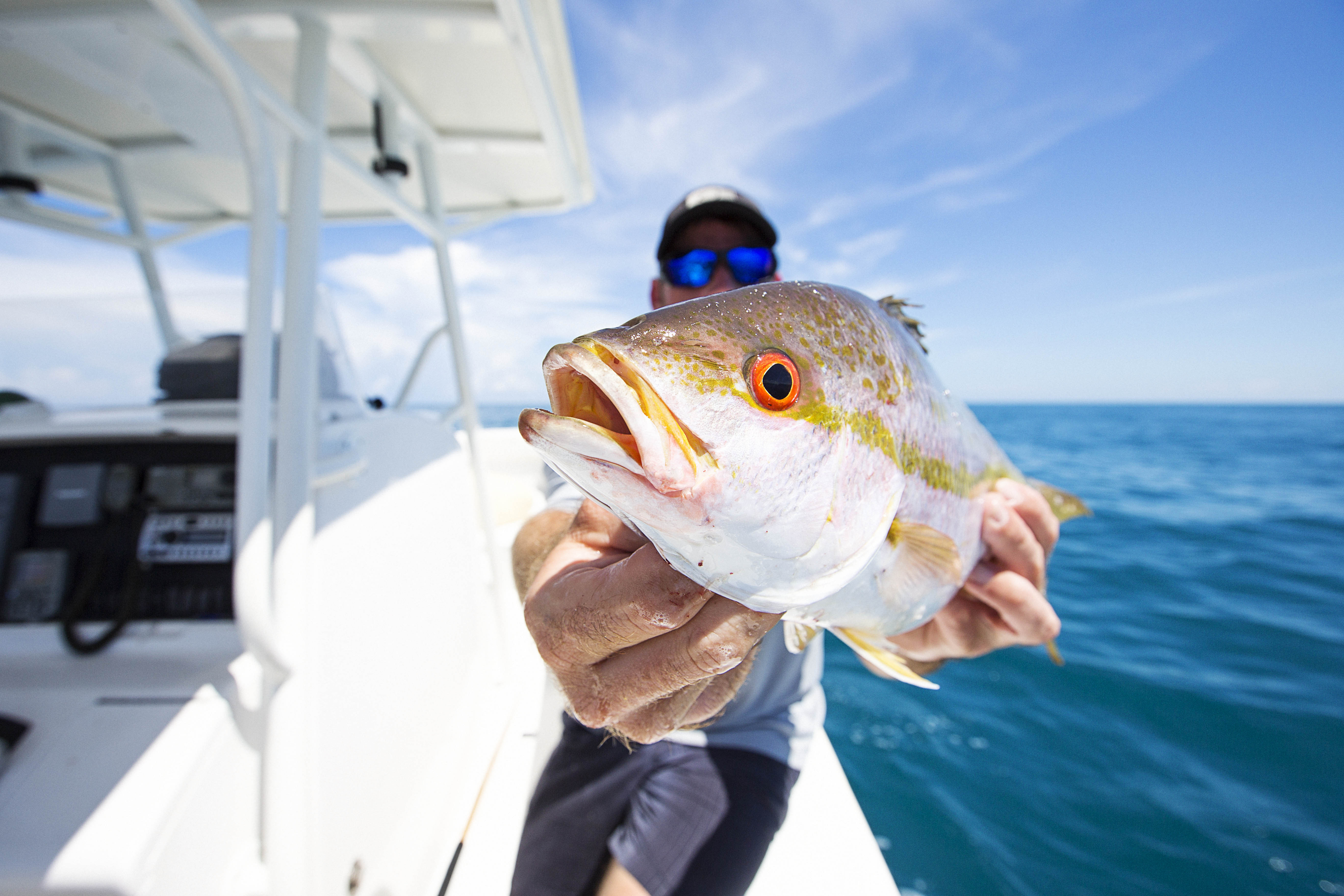 Fishing Charter - Yellowtail Snapper