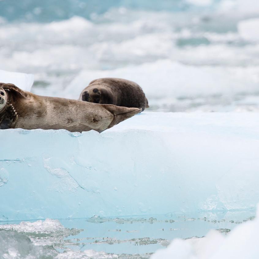 seal view copy