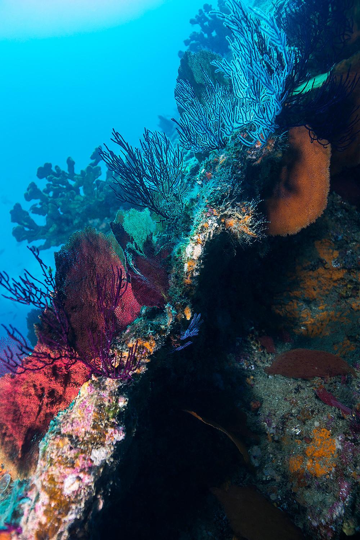 Coral of Cabo Pulmo Mexico