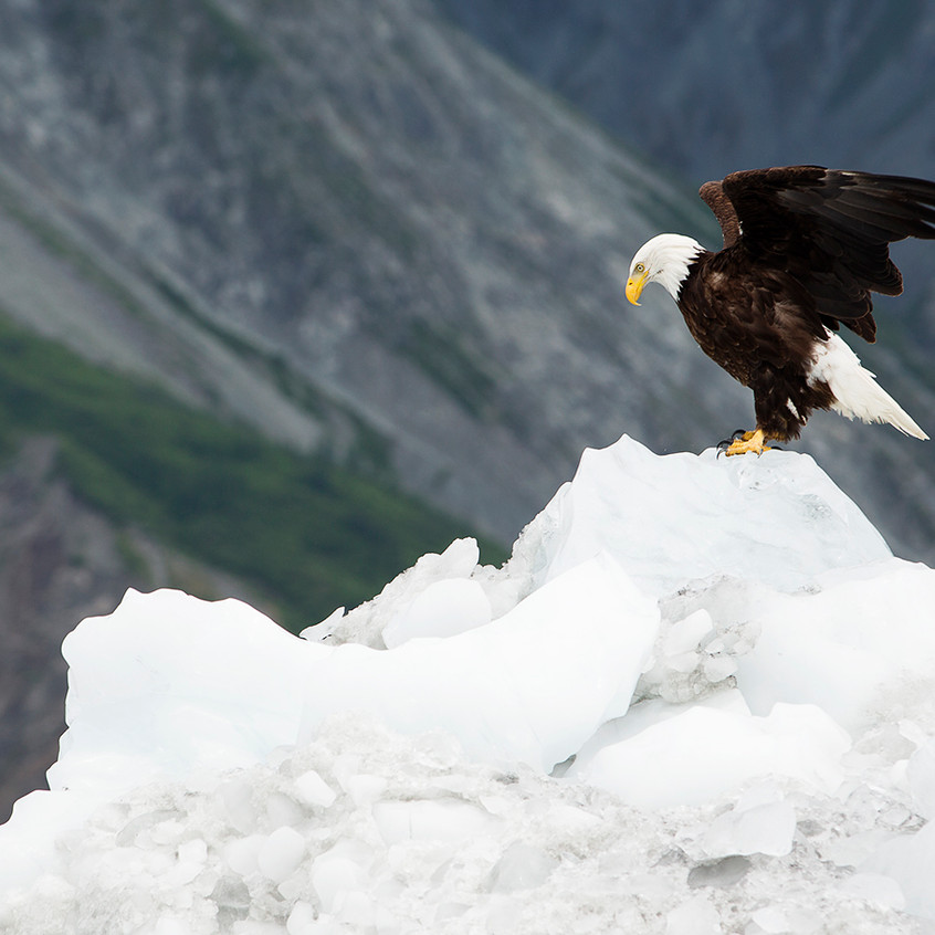eagle iceburg copy