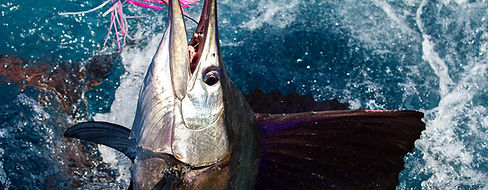 Sailfish Fishing Charter Key West