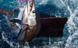 Yacht Travel Fishing Sailfish