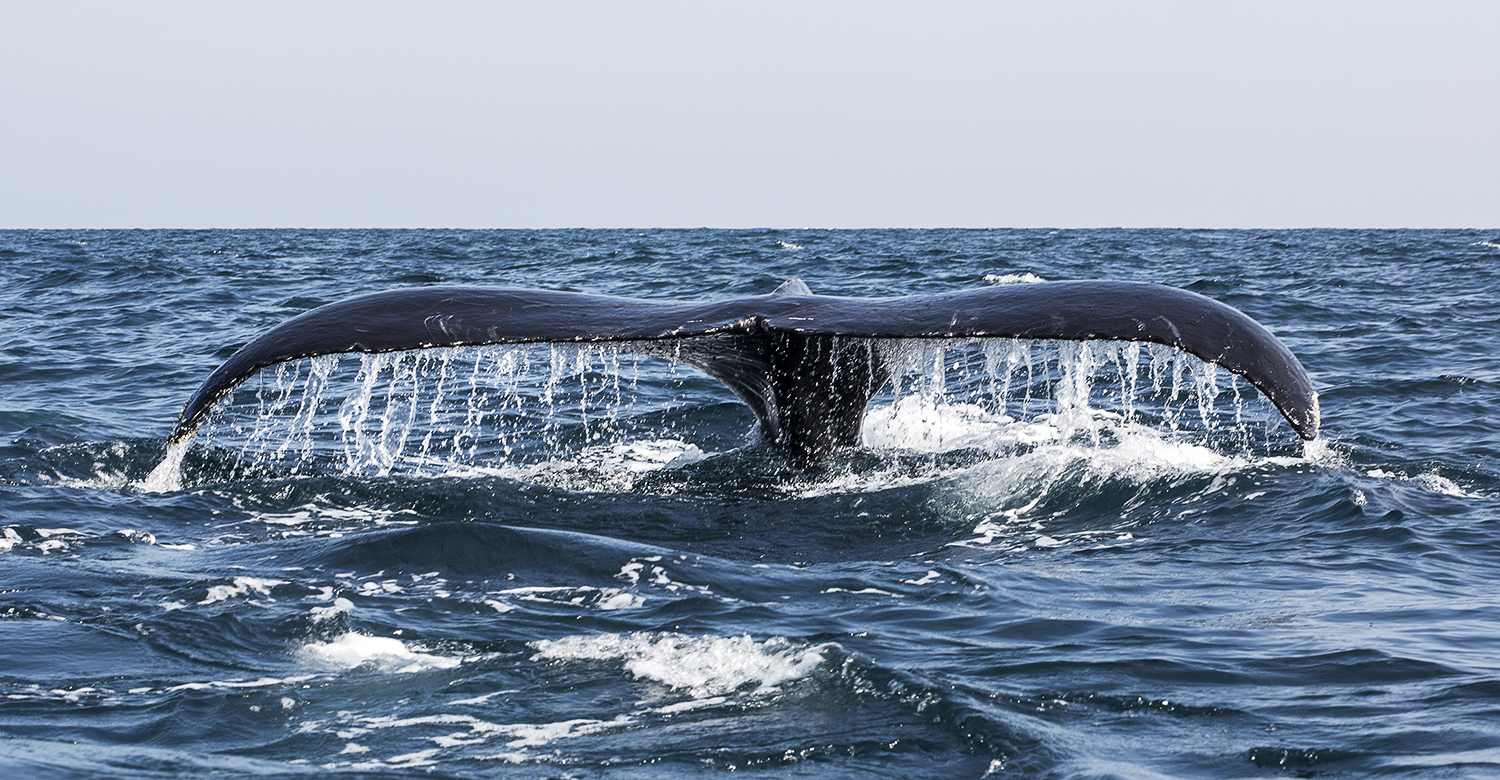 world travel photography whale