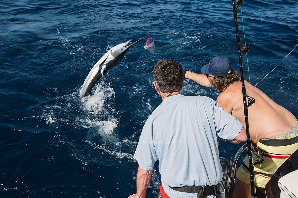 Cabo San Lucas Fishing Stripe Marlin