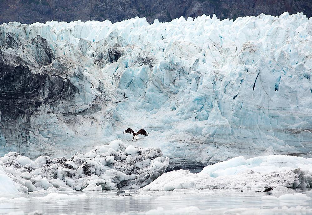 Glacier Bay with Eagle Alaska