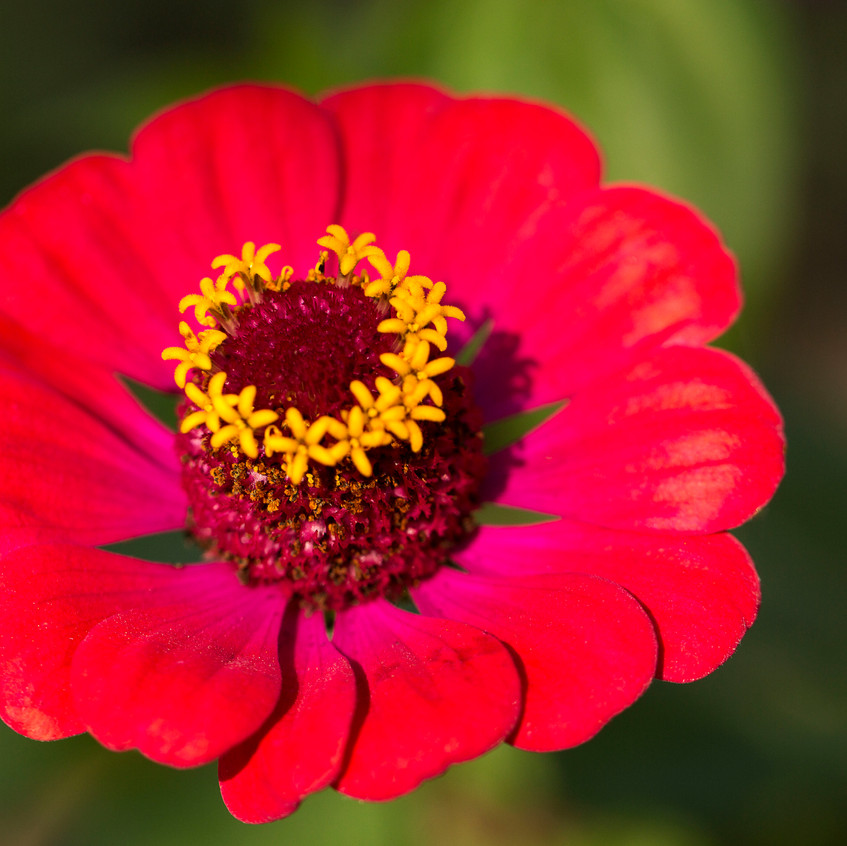 flower6 copy