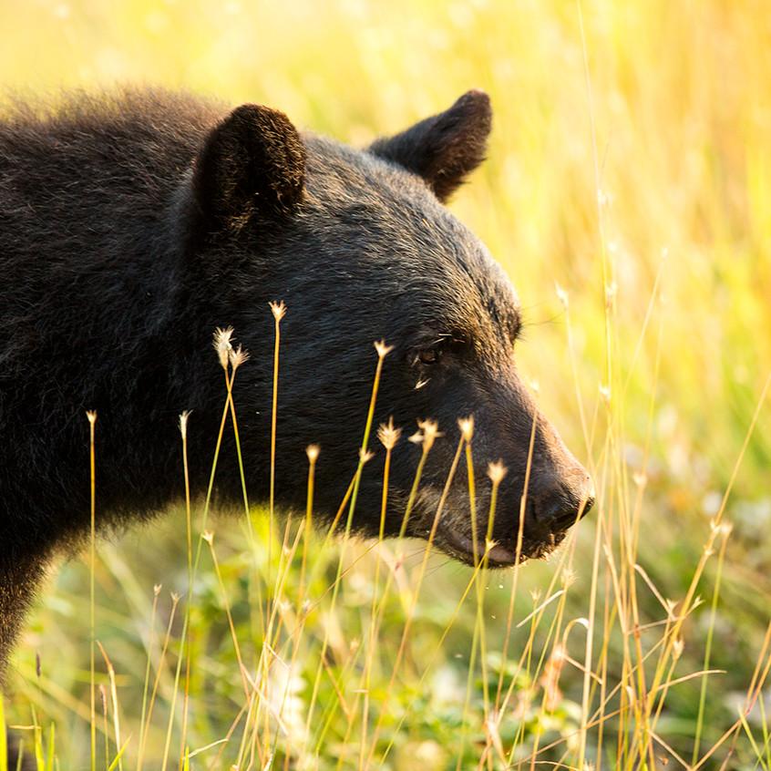 bear dreamy copy