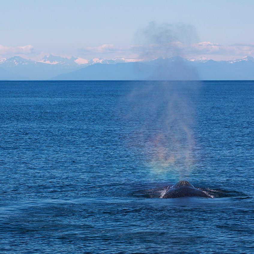 rainbow whale copy