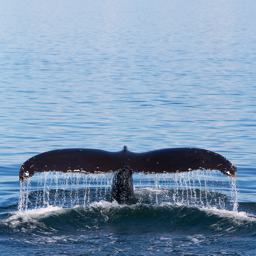 whale tail copy