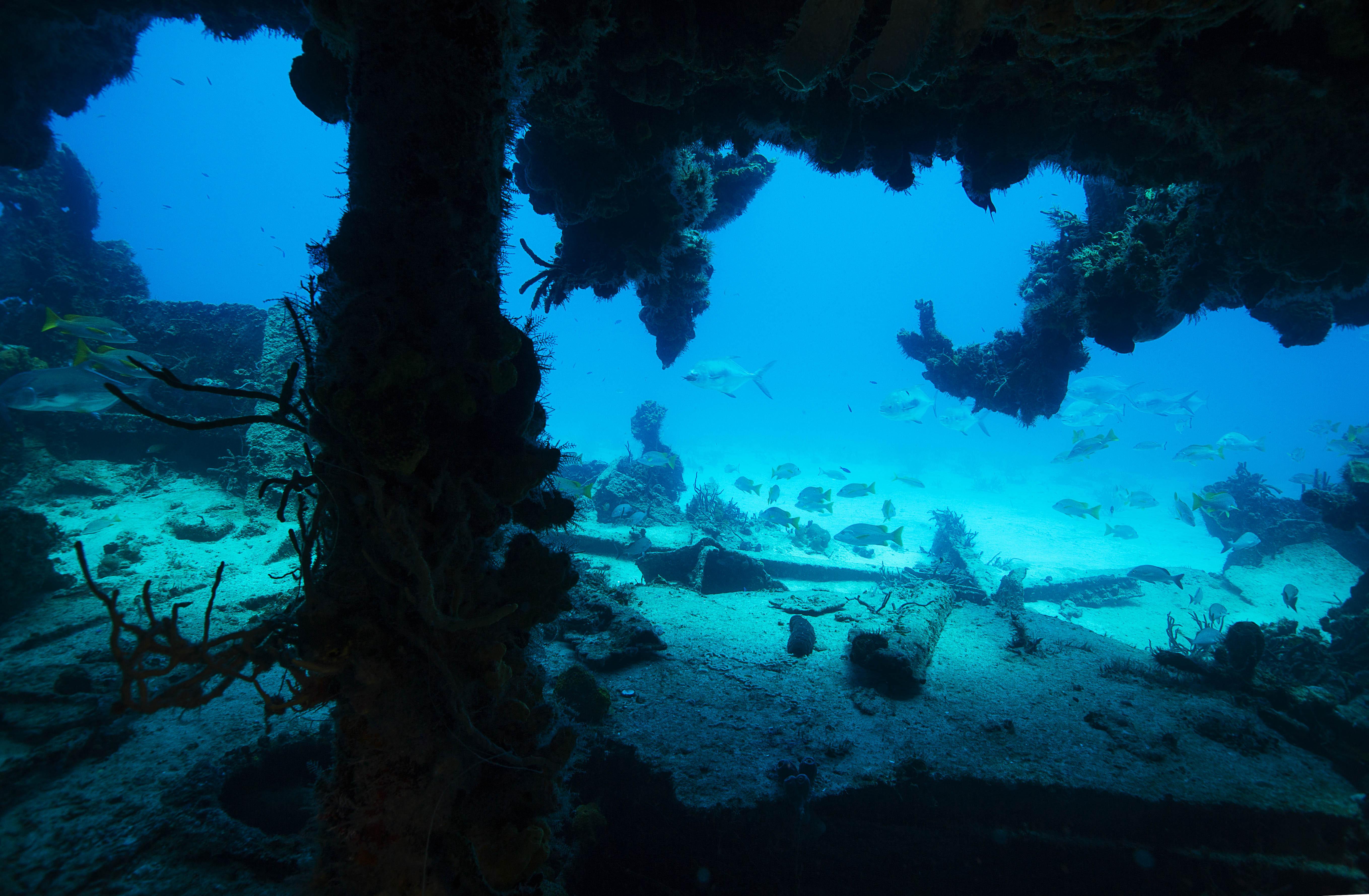 Travel Scuba Diving Bahamas