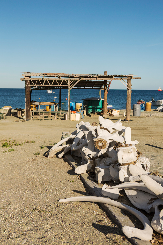 Whale Bones in Mag Bay